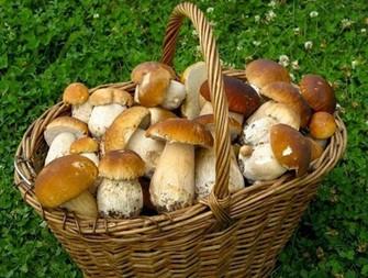 гриби на драгобраті